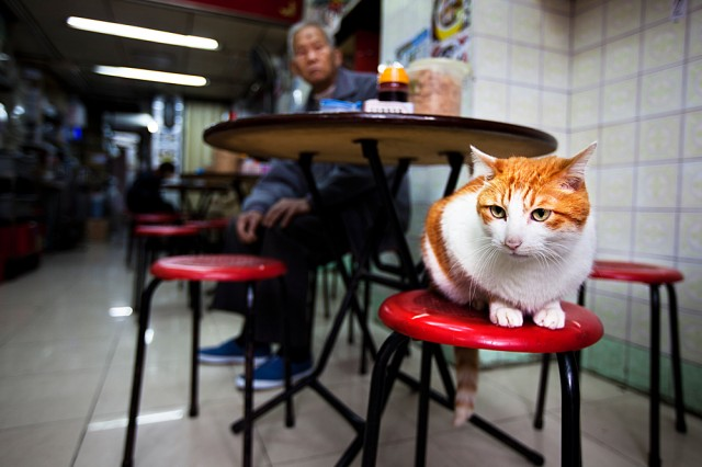 cat in snake soup cafe