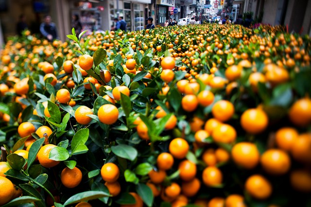 wall to wall kumquats
