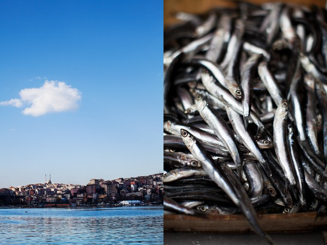 silvery fish from the Golden Horn