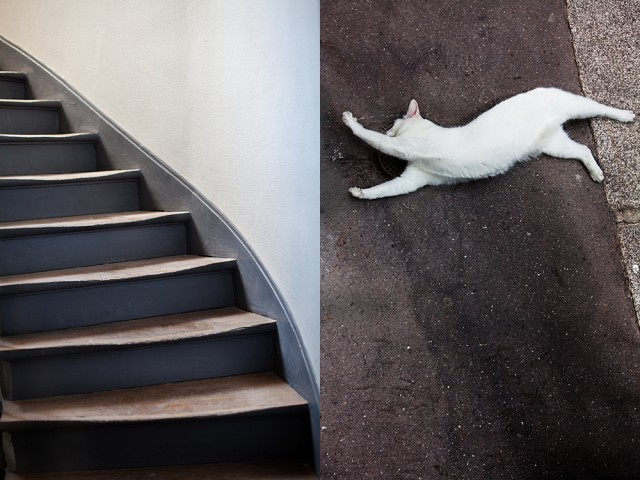 cat flying up stairs