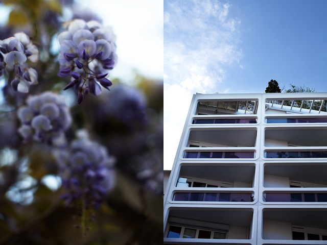 the building's colour scheme, 'wisteria'
