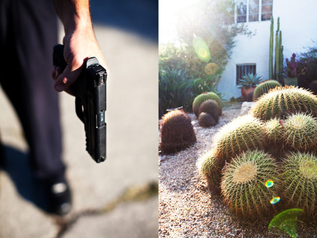 Suddenly from behind the Golden Barrel cactus a man leapt out with a gun.