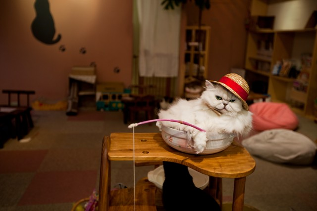 at the cat cafe