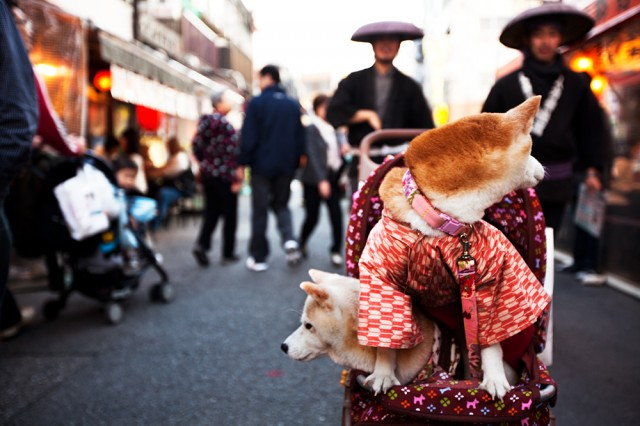 dogs in kimonos being followed by ninjas with big hats?