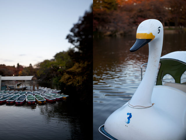 row boat or swan, take your pick