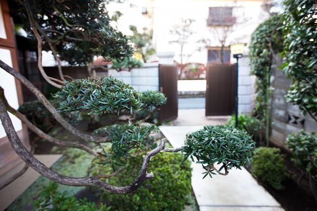 the garden :: 2