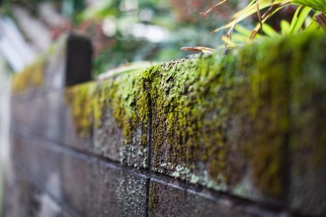 wall :: 2
