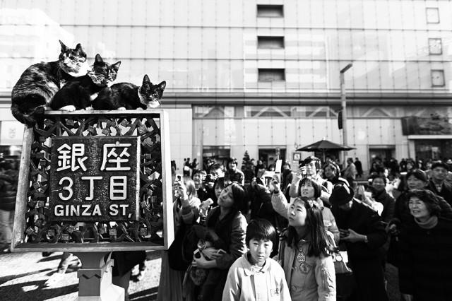 Ginza cats, Tokyo [b&w]